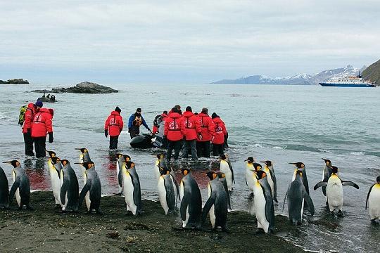 Южная Георгия пингвины