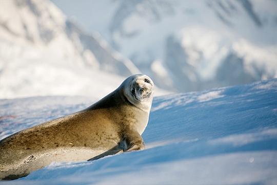 Животный мир Антарктики