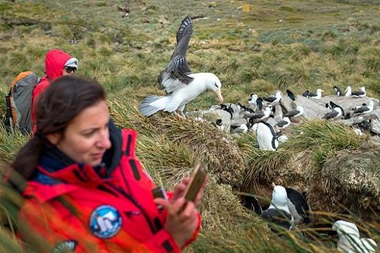 Фолклендские острова чайки
