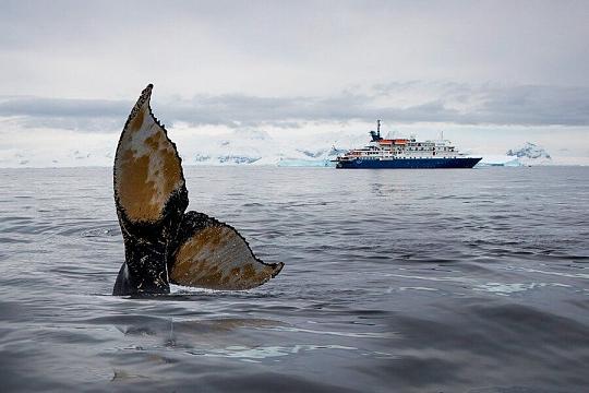Баренцево море кит